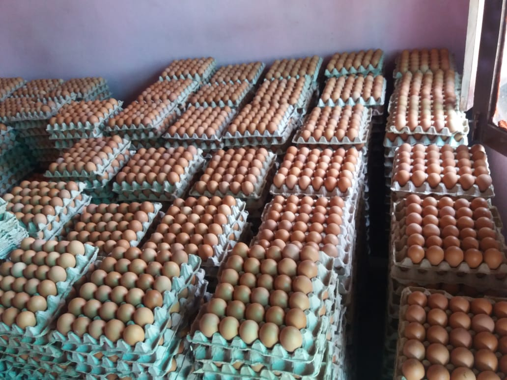 Production of Eggs at Arava Nepal's first Field Lamjung